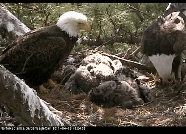 Lessons from the Eagle Cam – So Far