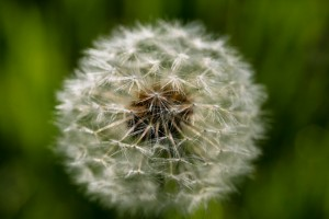 How to Reduce Allergens In Your House