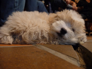 Sometimes we can't sleep like this puppy. Here's some tips to prevent insomnia.