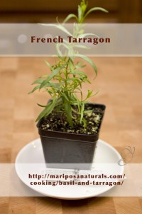 French Tarragon - Not a basil at all. I just needed tarragon for my herb garden.
