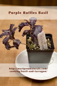 Purple Ruffles Basil - I like this one for its color and its ruffled leaves.