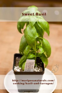 Sweet Basil - This is what is typically meant when Basil is called for in a recipe.