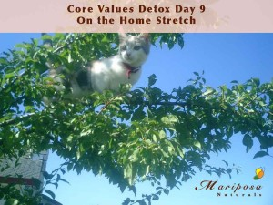 Core Values Detox Plus - Day 9