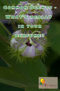 What's chemicals are lurking in your sweet-smelling fragrance?