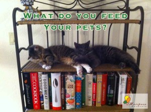 Why would you feed your pets sugar? Hint: These cats do not get treats with sugar!